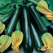 Zucchini Black Beauty (ORGANIC)