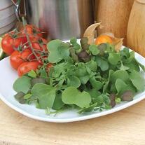Mixed Leaves 'Gourmet Garnish' ('Micro-Greens')