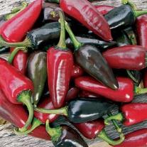 Chili (Hot) Hungarian Black