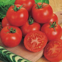 Tomat Moneymaker (ORGANIC)
