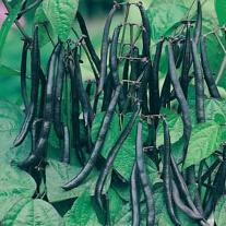 Böna Purple Teepee