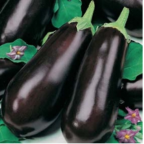 Aubergine Early Long Purple 2