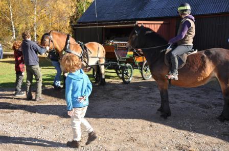 Bob är medhjälpare vid anspänning. Lika bra att få in  säkerthetsrutiner från börjar när de tänker skaffa egen häst till sin gård i Landeryd.
