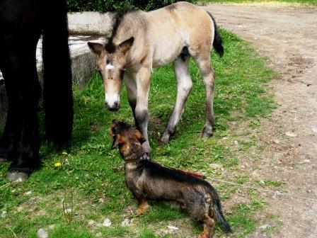 Må bra att lära oss av hur hundar är! CAHOM
