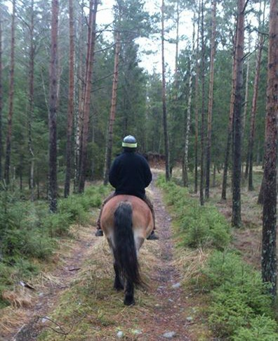 Ridtur i vår egen skog är helmysigt och ett bra sätt att inventera.. För jag tror min man har mest fokus på träden och inte så mycket på hästen!