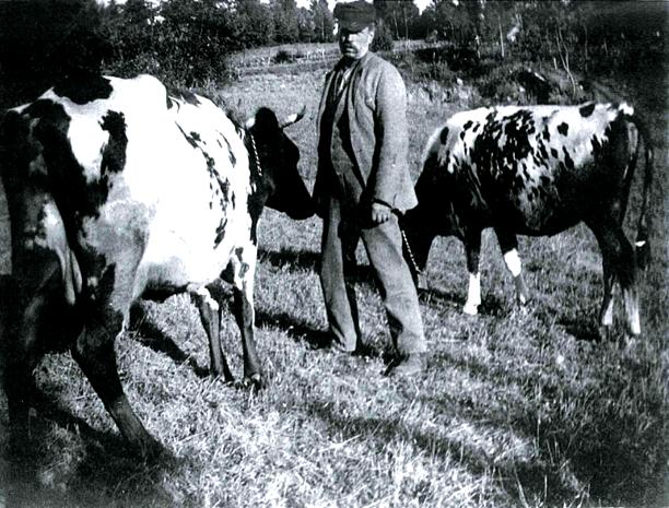 Höka Gustaf 1917 på Kämpenstorp. Foto från Mats Green, 2017