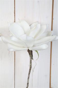 konstväxt-vit magnolia