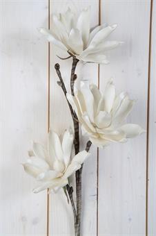 konstväxt-lotus