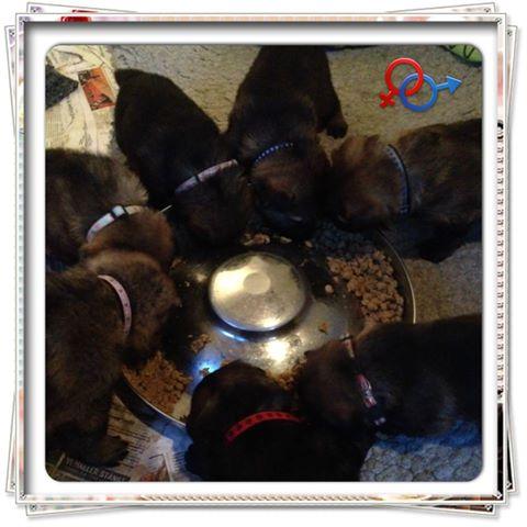 Deras första rediga mat