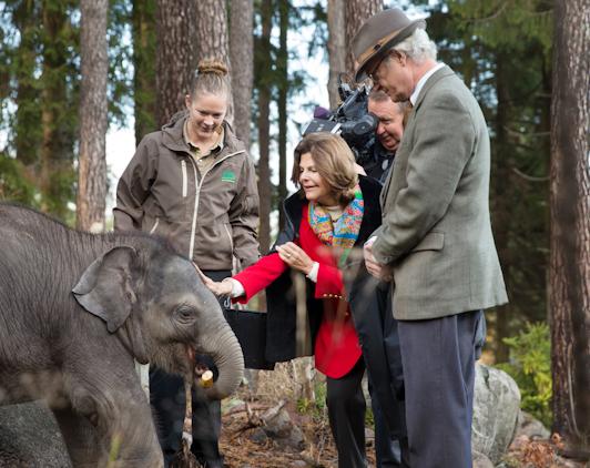 Thailands kungs gåva till vår svenska kung elefantkalven Namsai