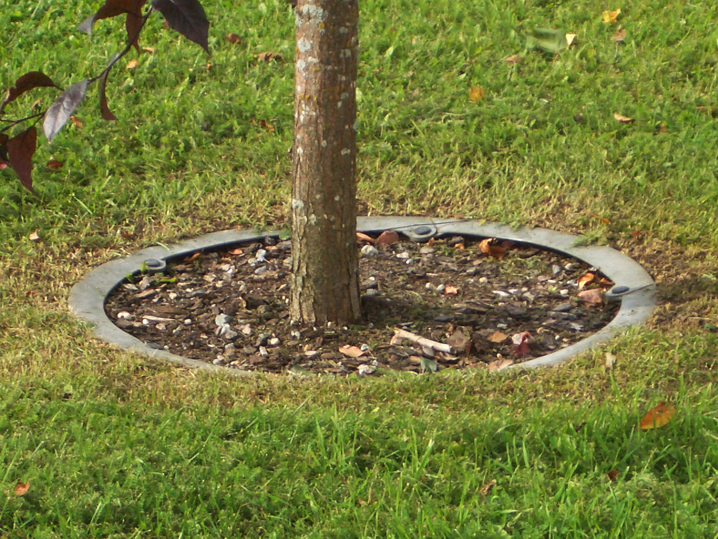 Trädvård med trädvårdsringen i trädgård