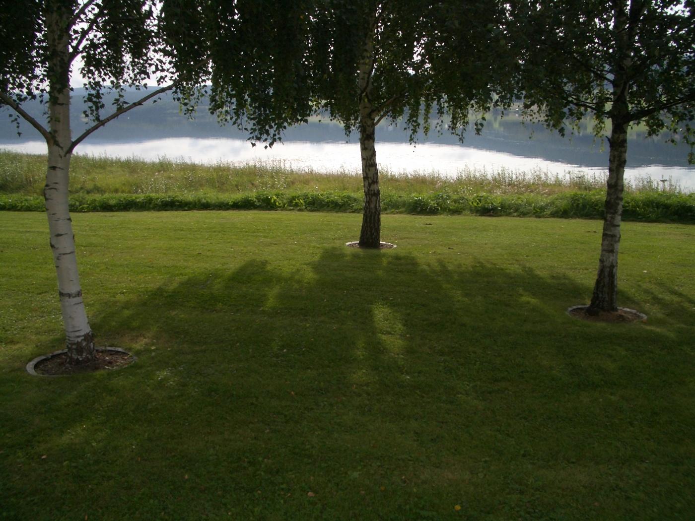 trädvård i park
