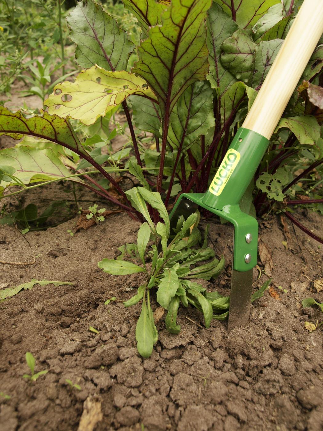 H11 Rensar ogräs i odling