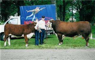 Champion heifer, Wittey av Herrgölet and champion bull, Lamports Solid Rock