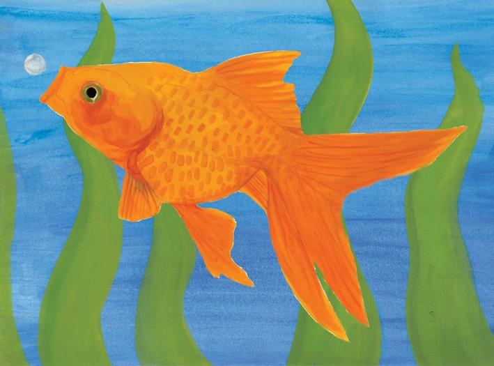 Natural-world-fish-image