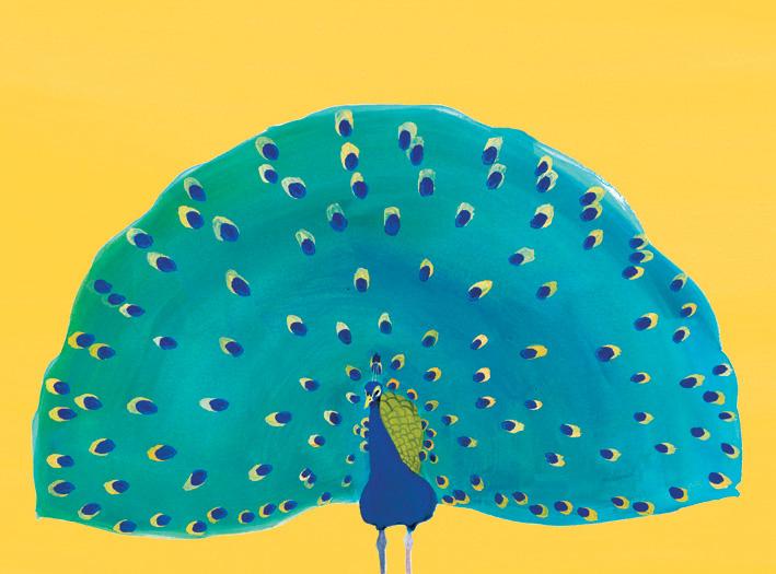 Natural-world-peacock-image