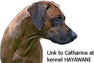 Länk till Catharina, Kennel Hayawani