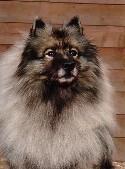 Min första egna hund - Kajsa.