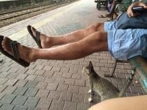 Alla djur älskar Ubbes ben, han älskar inte djuren...