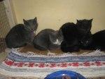 Fyra ungar från ladan
