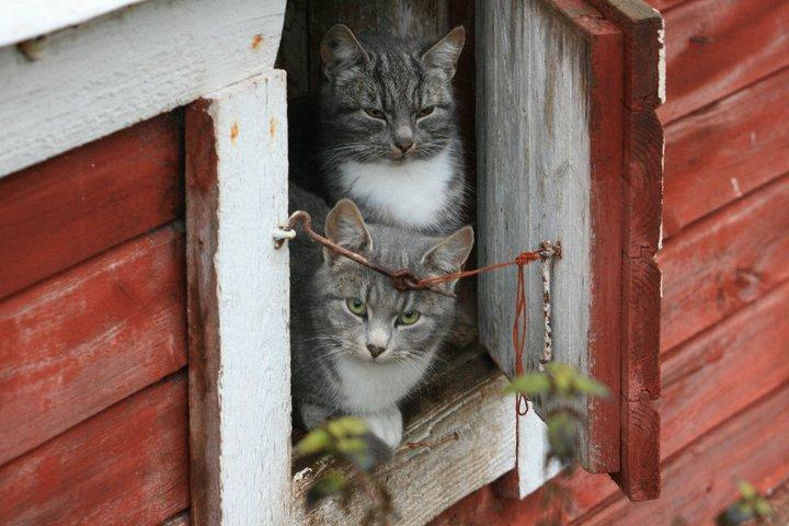 Lyckliga TNR-katter!