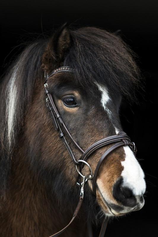 nordic-horse-komb-brun