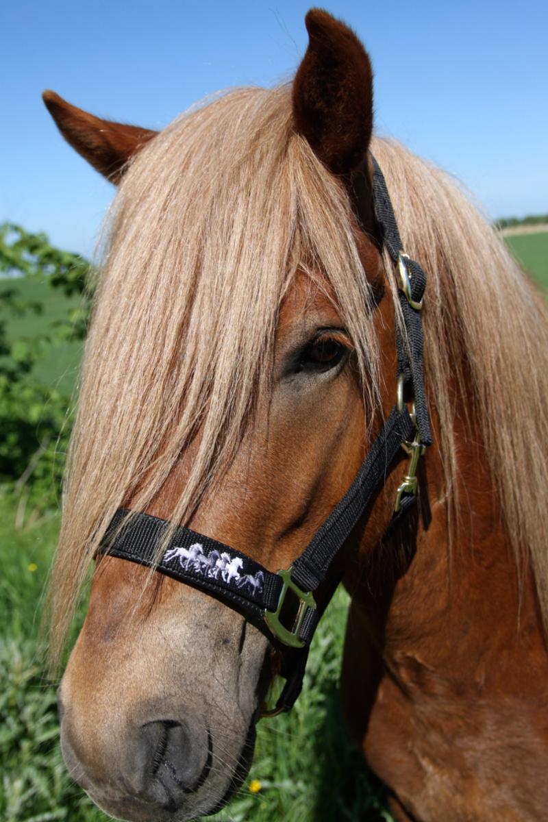 k315-on-horse