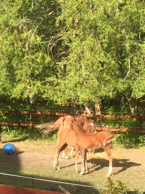 Bästa vännerna Crush och Grace har morgonmys i hagen.