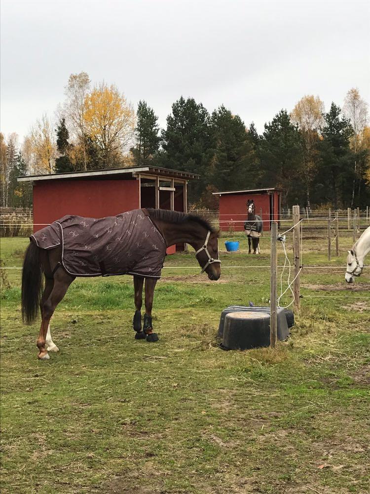 Heavenly undersöker sin nya hage och längst bort i bild spanar pappa Montana på sin dotter:) Tänk om de bara visste det!