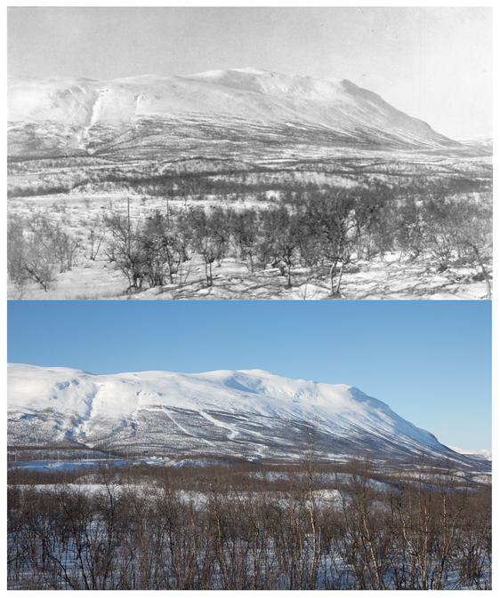 The mountain Nuolja in winter. Note that the tree line has shifted upwards. Photo Credit: black-and-white  C. G. Alm 28 February 1921 and the colour photo Oliver Wright 28 February 2017 (copyright Oliver Wright 2017). Photp from Umeå Univsersity press release.