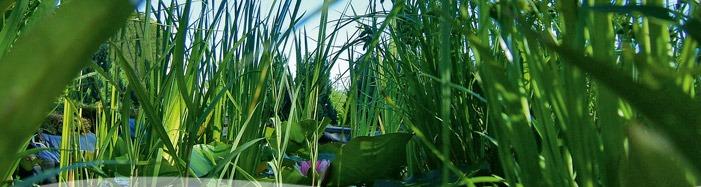 dammprodukter, bygga damm , natursten till trädgården