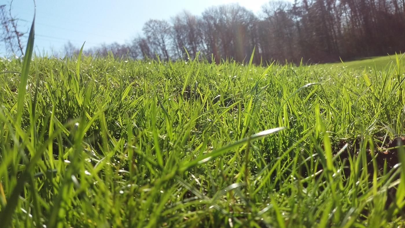 Få grönare gräs än grannen