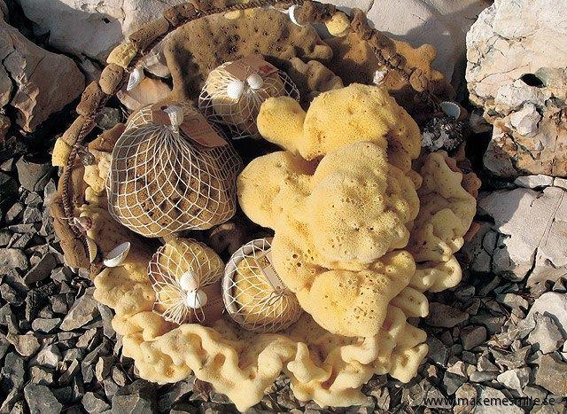 Badsvampar i olika stadier