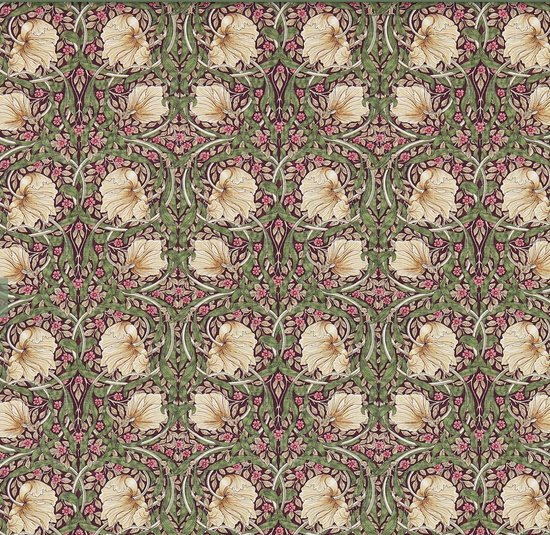 Pimpernel lila S