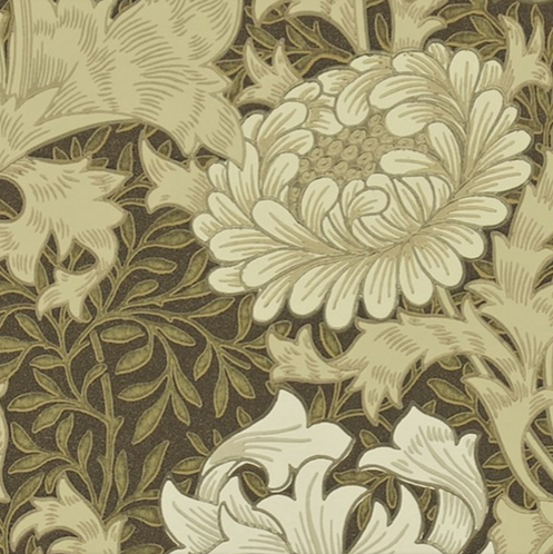 Chrysanthemum Brun L