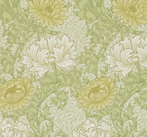 Chrysanthemum Gul L