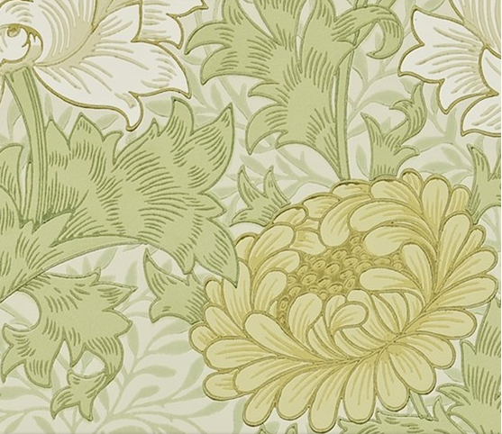 Chrysanthemum Gul S