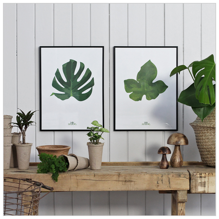 Monstera & Jatropha poster