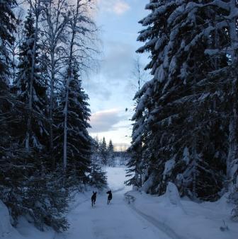 Vinterland...