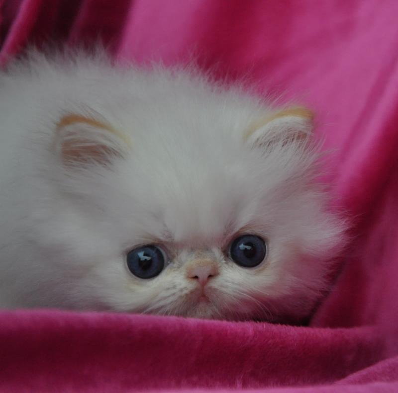 Zsa Zsa's BabyBoo, PER d2133, bor hos Katarina Thell, Cinatellinas