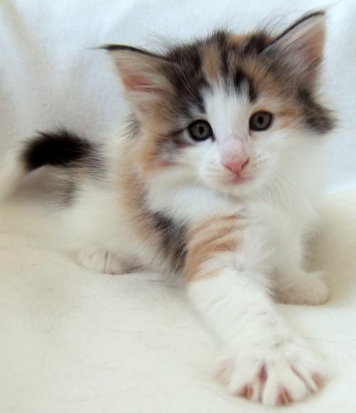 Kassis, 6 weeks old