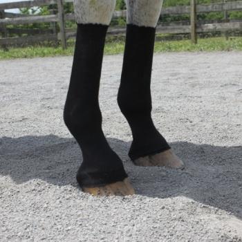 HorseSox™, Häst, Svart - HorseSox™, Häst, Svart