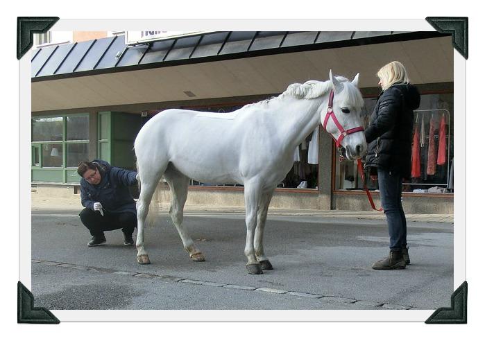 Sollentuna Veterinärklinik - Hästbesök är alltid ett uppskattat inslag i Häggvik Centrum