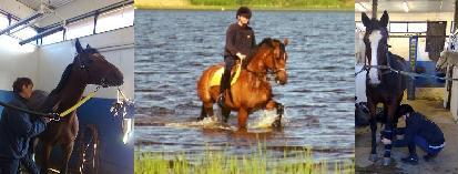 Rehabilitering av sporthästar