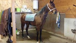 Här behandlar jag en häst med Bemer vet. En medicintekniskutrustning som ökar mikrocirkulationen, alltså de allra minsta kärlen som vi inte kan se med blotta ögat.