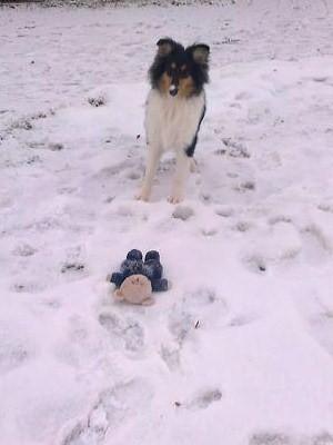 TRICO i snö för första gången Spännande