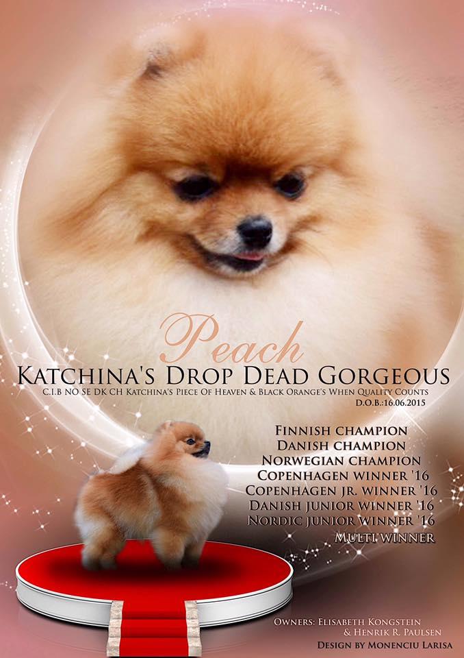 Katchinas Drop Dead Gorgeous
